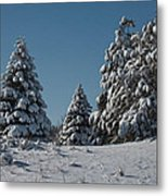 Snowy Pines Metal Print by Jeff Swanson