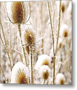 Snowy Thistle Metal Print by The Forests Edge Photography - Diane Sandoval