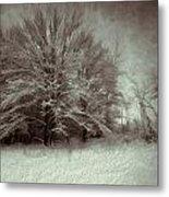 Snowy Treasure Metal Print