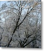 Snowcovered Trees Metal Print