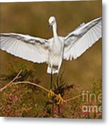 Snowy Wingspread Metal Print