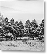 Snowy Winter Pine Trees In Black And White Metal Print