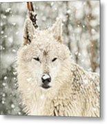 Snowy Wolf Metal Print