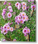 So Many Wings Metal Print