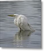 Soaking In The Pond Metal Print
