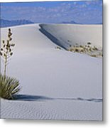 Soaptree Yucca At White Sands Nm Metal Print