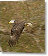 Soaring Over  Metal Print
