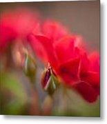 Soaring Red Rosebud Metal Print