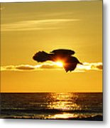 Soaring With Confidence Metal Print
