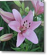 Soft And Beautiful Metal Print by Victoria Sheldon