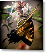 Soft As The Morning Light Metal Print
