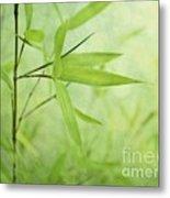 Soft Bamboo Metal Print