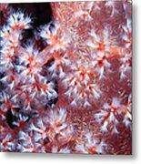 Soft Corals 7 Metal Print