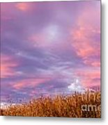 Soft Diffused Colourful Sunset Over Dry Grassland Metal Print
