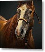 Soft Focus Horse Metal Print