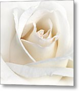 Soft Ivory Rose Flower Metal Print
