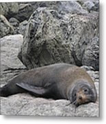Soft Life Seal Metal Print