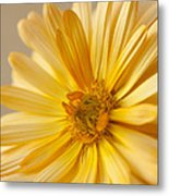 Soft Marigold Metal Print by Anne Gilbert