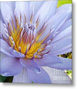 Soft Mauve Waterlily Metal Print