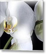 Soft Orchid Metal Print