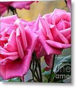Soft Pink Roses Metal Print