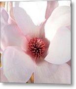 Soft Pink Saucer Magnolia Metal Print