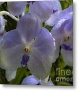 Soft Purple Orchids Metal Print