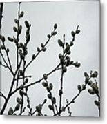 Soft Pussy Willows - Hard Gray Sky Metal Print