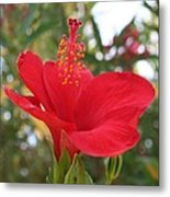 Soft Red Hibiscus With A Natural Garden Background Metal Print