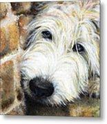 Soft Wheaten Terrier Metal Print by Natasha Denger