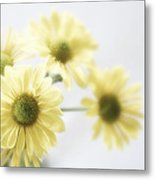 Soft Yellow Poms Metal Print
