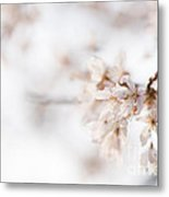 Softly Blossom Metal Print