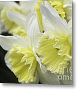 Softly Spring Metal Print