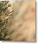 Softness In The Desert Metal Print