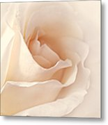 Softness Of A Peach Rose Flower Metal Print