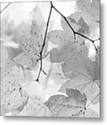 Softness Of Maple Leaves Monochrome Metal Print