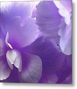 Softness Of Purple Begonias Metal Print