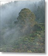 Solitariness Metal Print