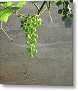 Solitary Grapes Metal Print by Deb Martin-Webster