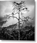 Solitary Tree Metal Print
