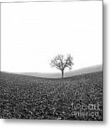 Solitary Tree In Winter. Auvergne. France Metal Print