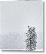 Solitude II Metal Print by Michele Steffey