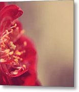 Some Light Into Your Darkness Metal Print by Laurie Search