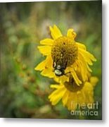 Something Wild Metal Print