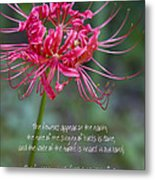 Song Of Solomon - The Flowers Appear Metal Print