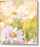 Song Of Spring I - Lovely Soft Pink Daisies Metal Print