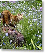 Sonoma In The Wildflowers Metal Print