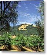 Sonoma Valley Vineyard Metal Print
