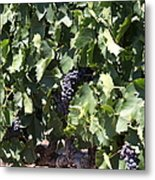 Sonoma Vineyards In The Sonoma California Wine Country 5d24489 Metal Print