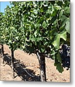 Sonoma Vineyards In The Sonoma California Wine Country 5d24491 Metal Print